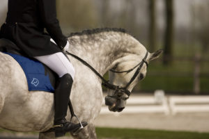 Huufe Horse Dressage Grey