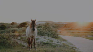 whole body photo of a horse in a country side dirt road