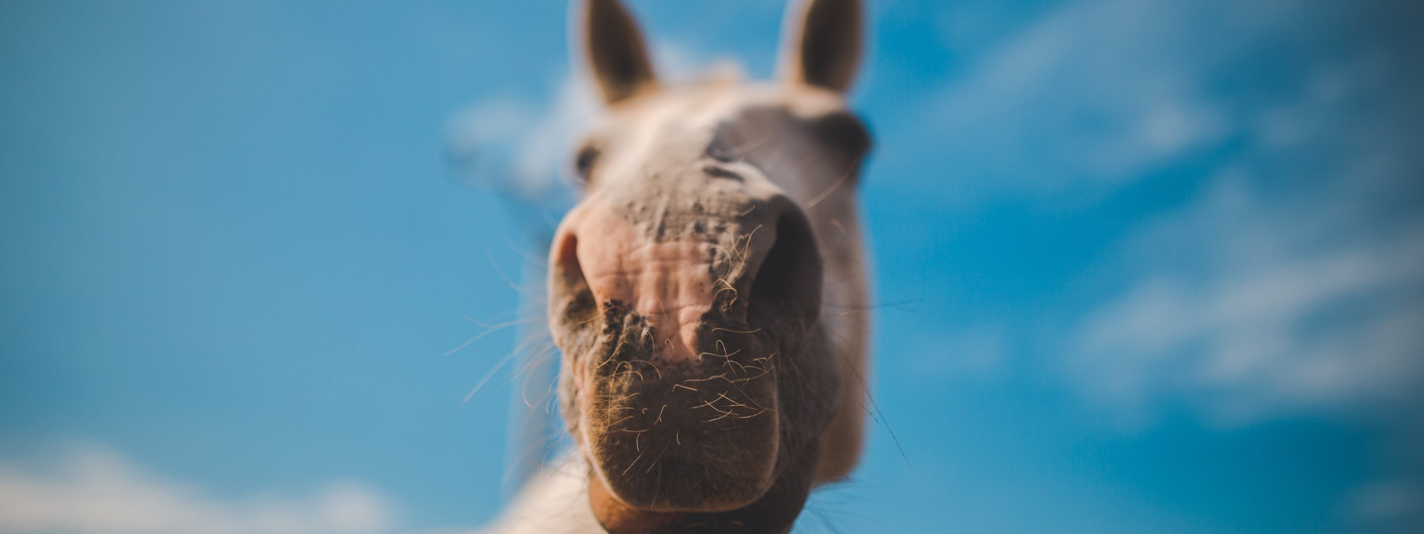 equine social media huufe app