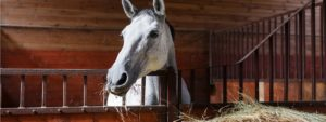 Equine nutrition stable management