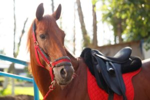 Horseback riding safety considerations for trail riding alone