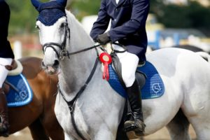 Showjumping competitions and how to get best equine performance