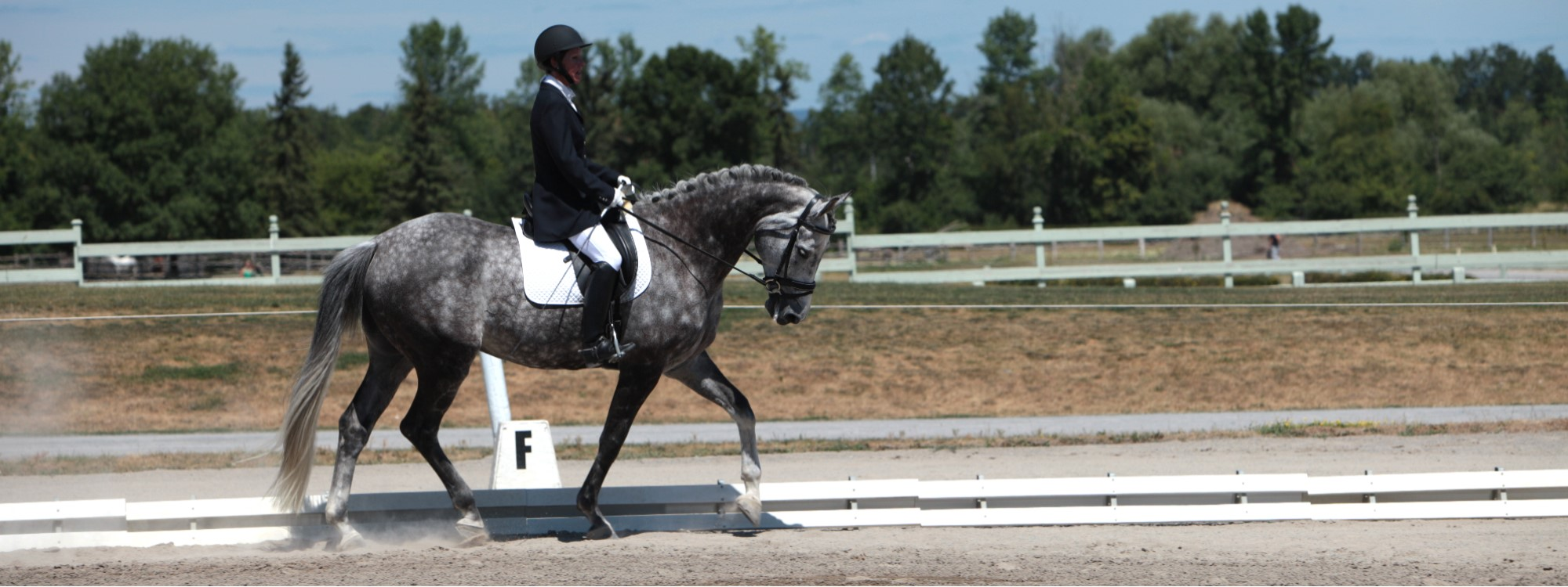 tip on how to improve an equestrians dressage scores