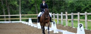 Huufe New to Dressage