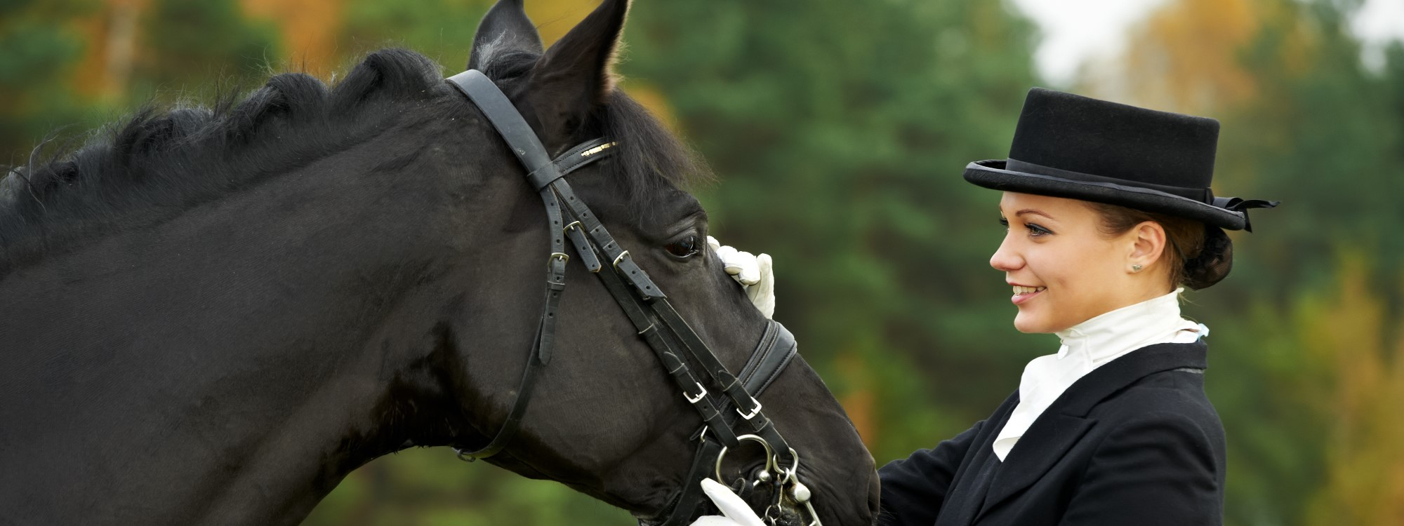 Dressage rider and her black horse