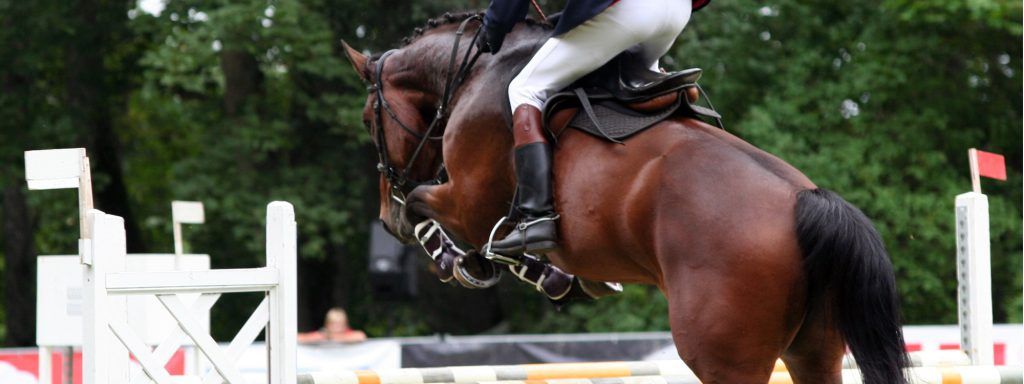 Selling/buying your horse or riding equipment - The best equestrian classifieds yet?