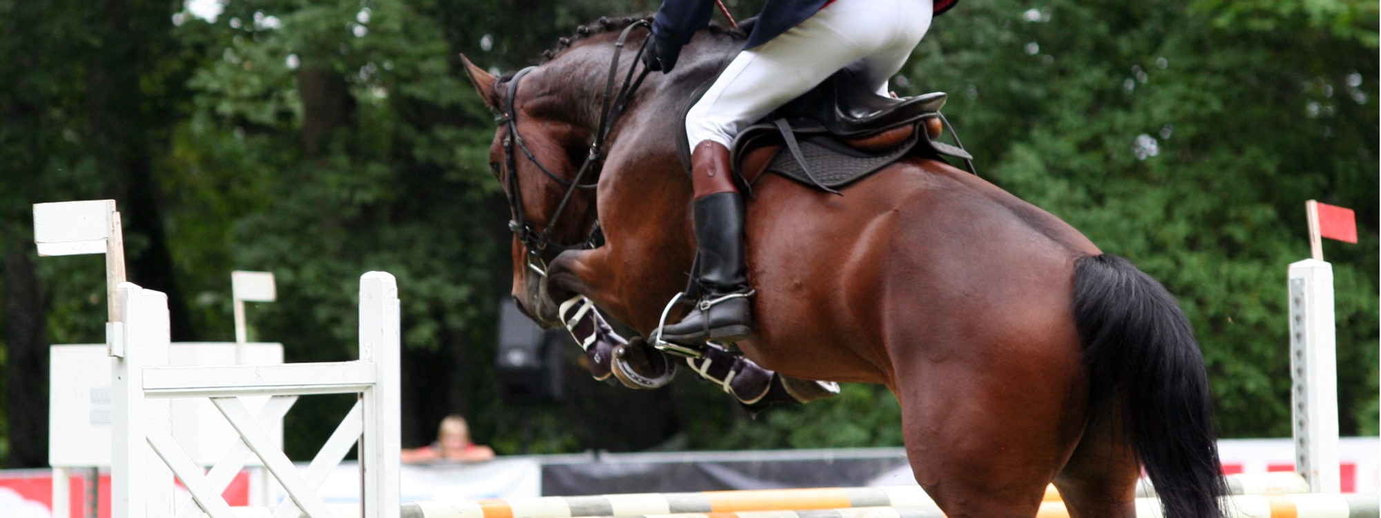 confidence in showjumping safety app