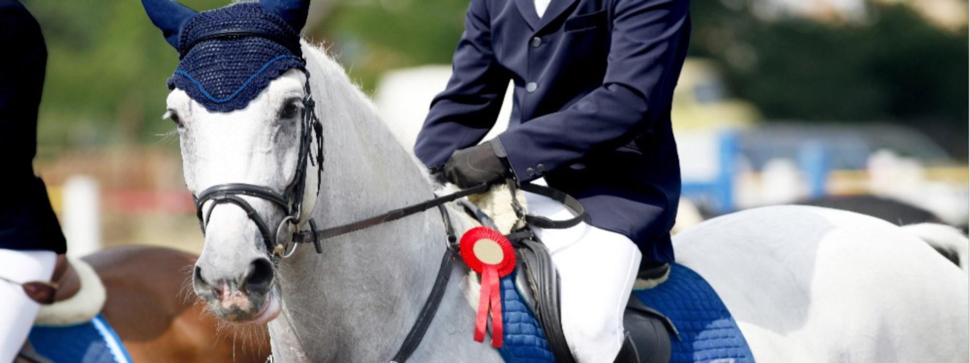 Grey horse wins show jumping