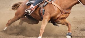 Huufe looks at western riding exercises in flexion
