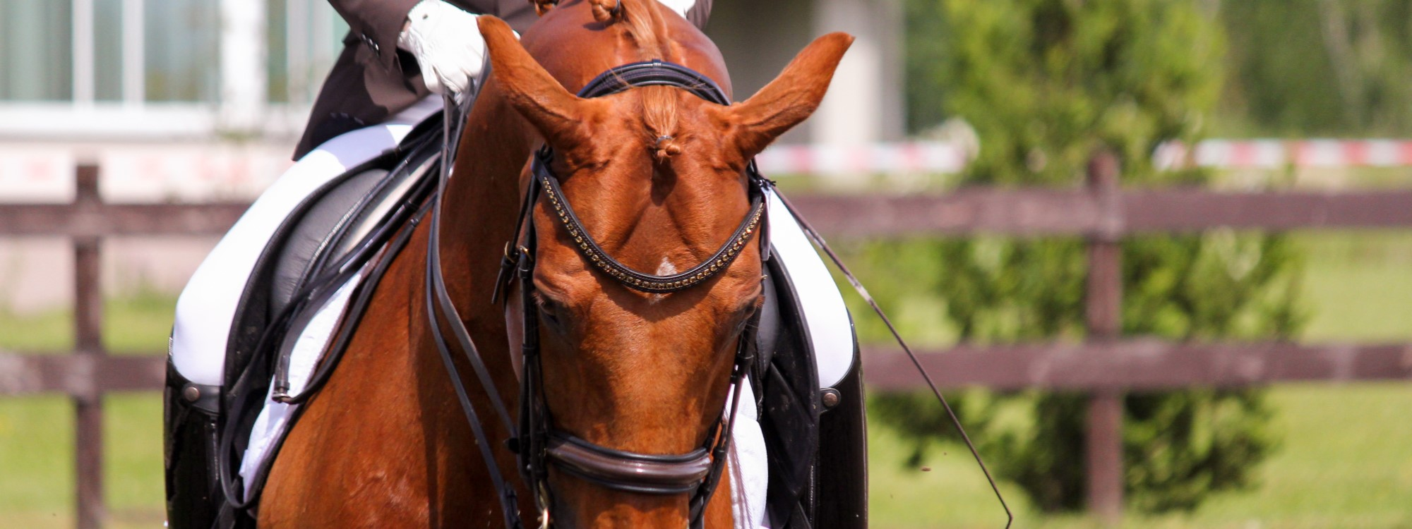 Chestnut horse competing in dressage
