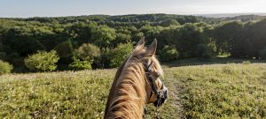 horse hacking out with huufe the horse riding safety app