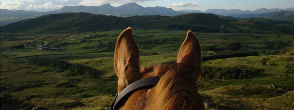 Chestnut horse's ears out on a ride