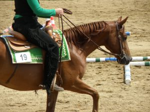 quarter horse in trail riding competition