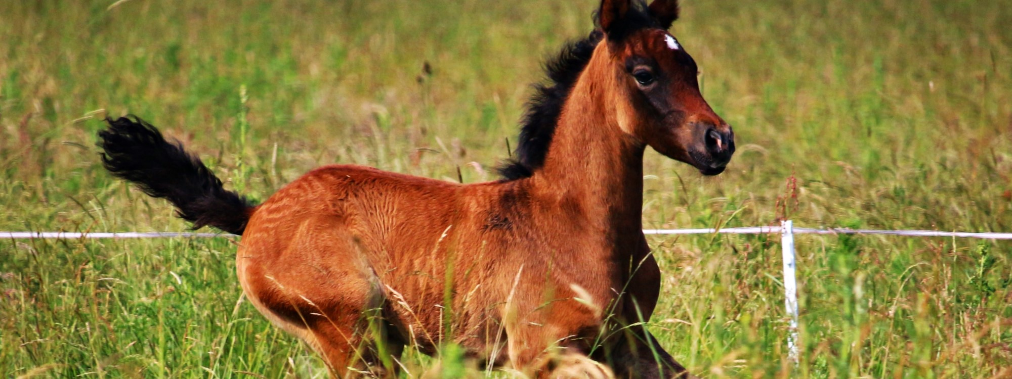 foal galloping across grass field