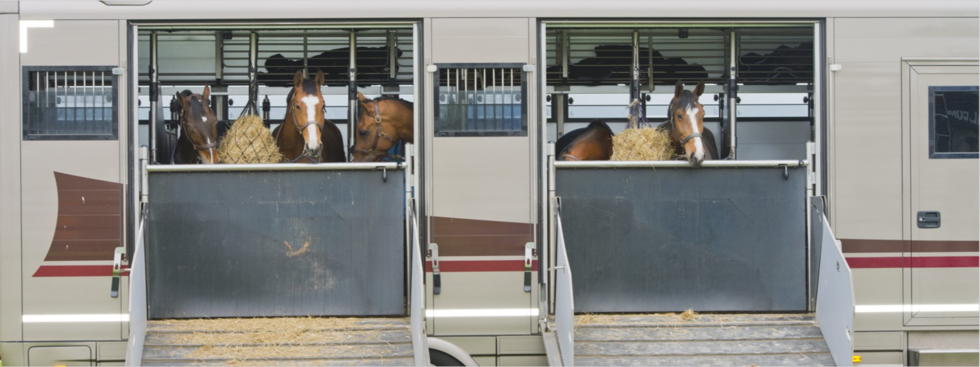 horses travelling