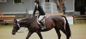 bay horse winning at a competition