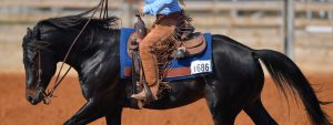 quarter horse ridden in western competition