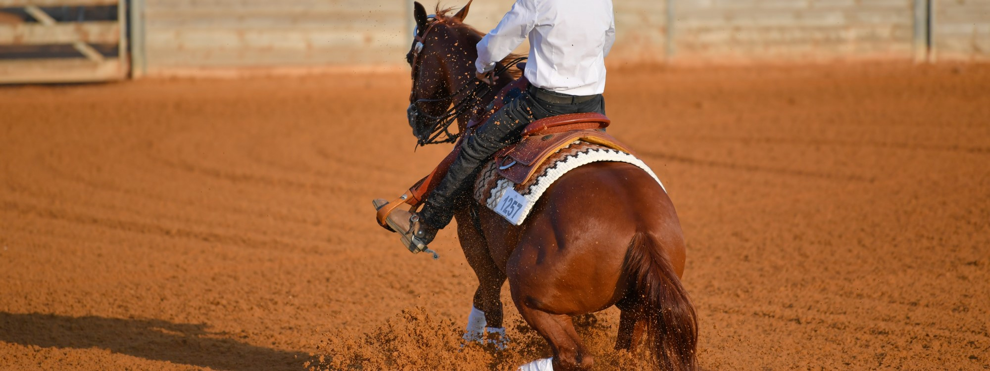 western horse doing reining