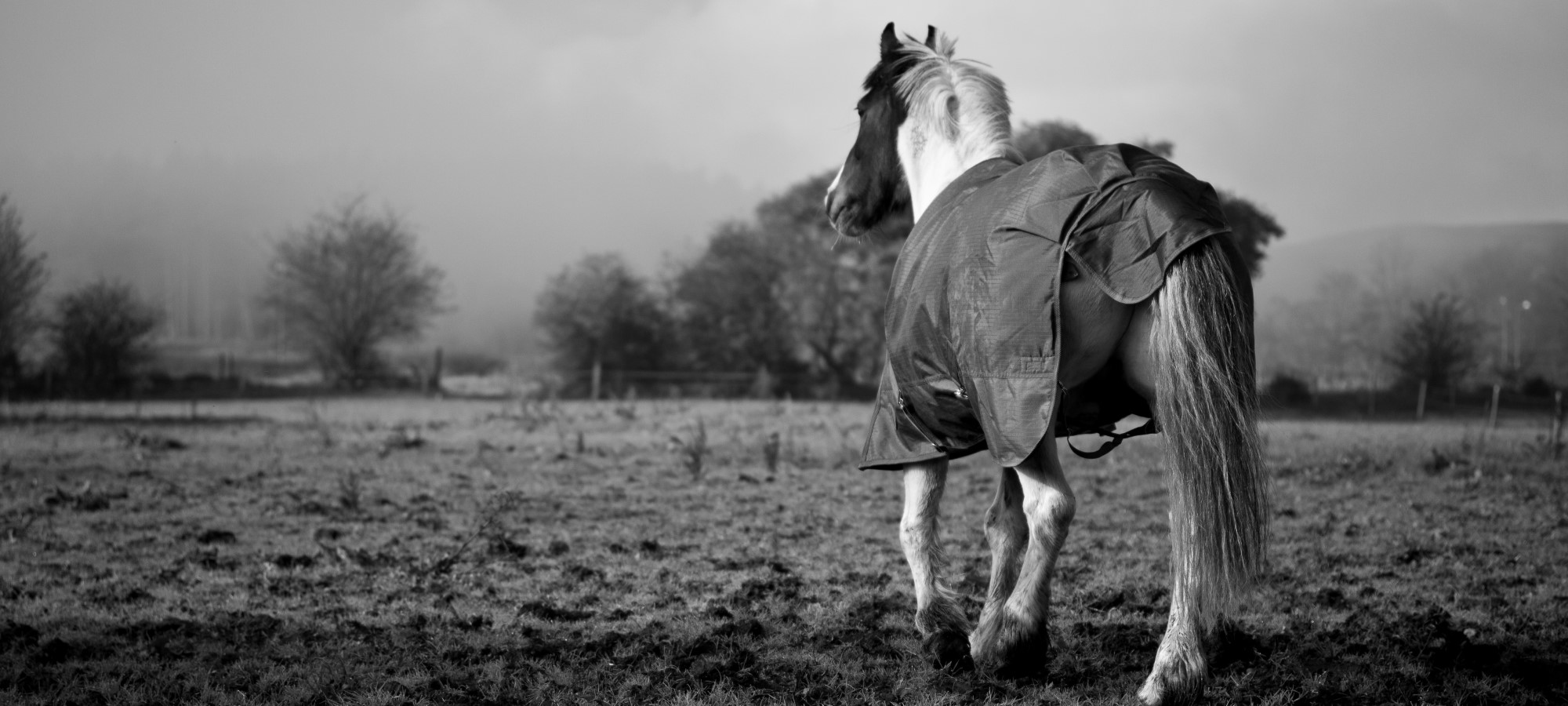 horse out in field in rug