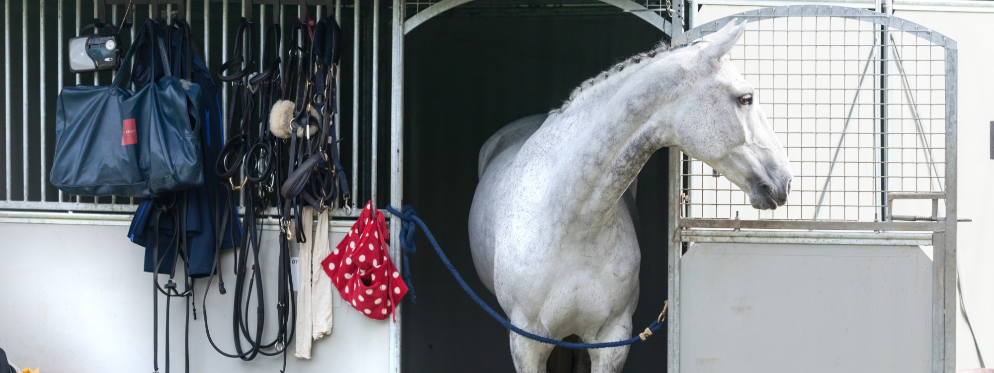 bay horse at competition stable