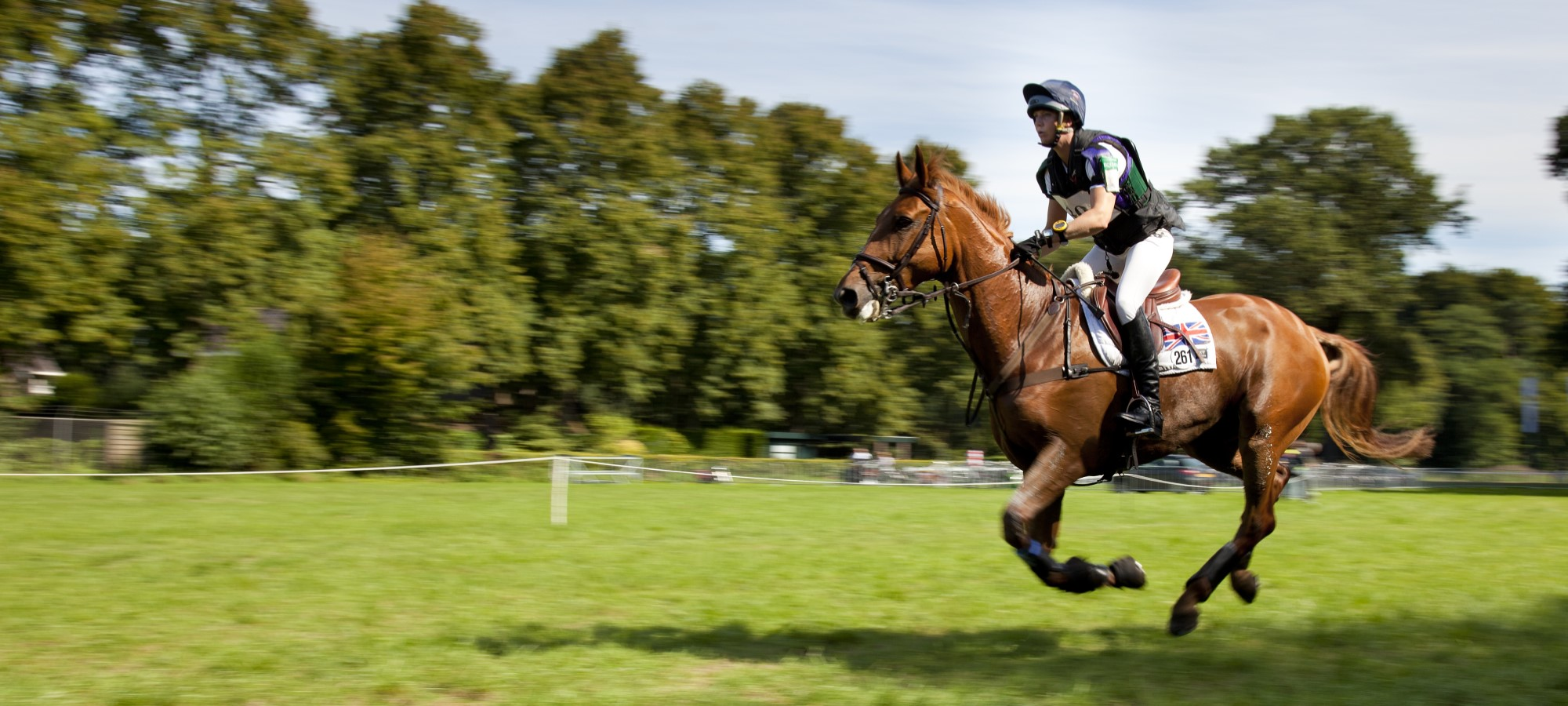 horse competing in eventing